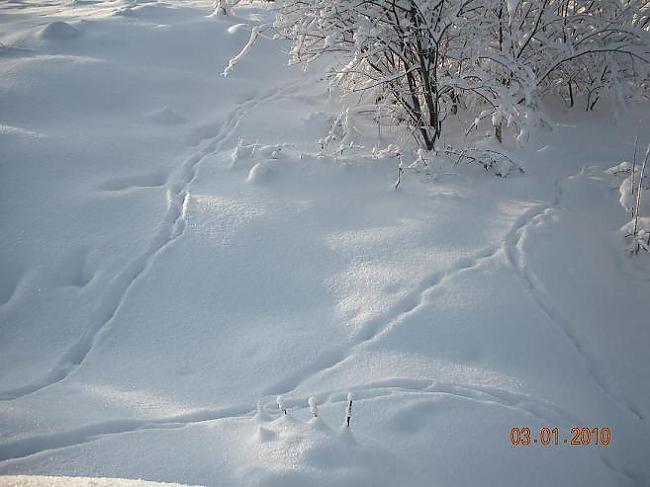Pēdas sniegā Autors: Domia Ziema