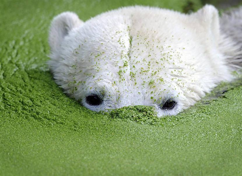 Slavenais Berlīnes Zoo... Autors: KingOfTheSpokiLand 75 Pārsteidzošas dzīvnieku fotogrāfijas!