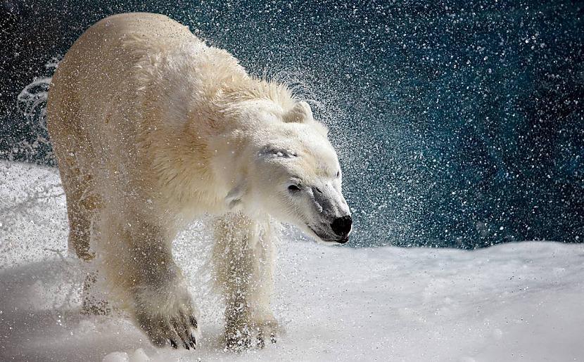 Polārlācis Wildlife Zoo ... Autors: KingOfTheSpokiLand 75 Pārsteidzošas dzīvnieku fotogrāfijas!