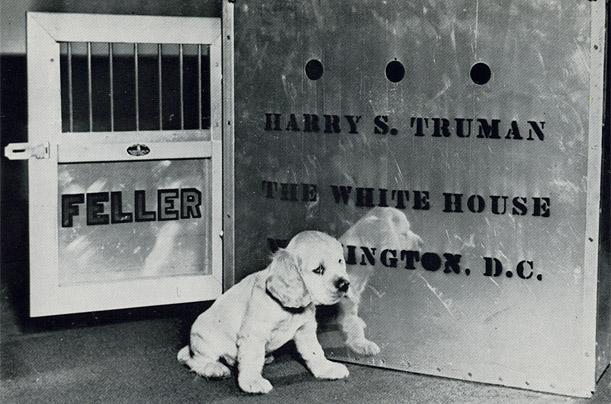 Harija Trūmena kokerspaniels... Autors: aisse Valsts pirmie suņi