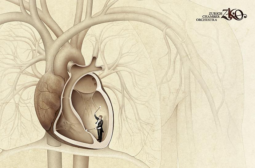 Dienas laika sirds veic ap... Autors: Moonwalker Fakti par sirdi