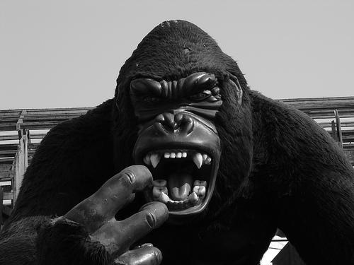 Lai arī pieauguši gorillas ir... Autors: MilfHunter Kuram dzīvniekam garākais?