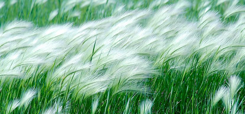 Lielākais vēja ātrums kurš ir... Autors: bizonis1 Laika apstākļu daudzveidība
