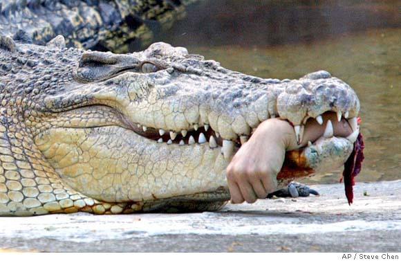 4vietakrokodīlivar dzīvot tuvu... Autors: ilovepancakes Top10 nāvējošākie dzīvnieki