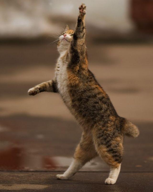 Autors: reds Jautrs kaķis