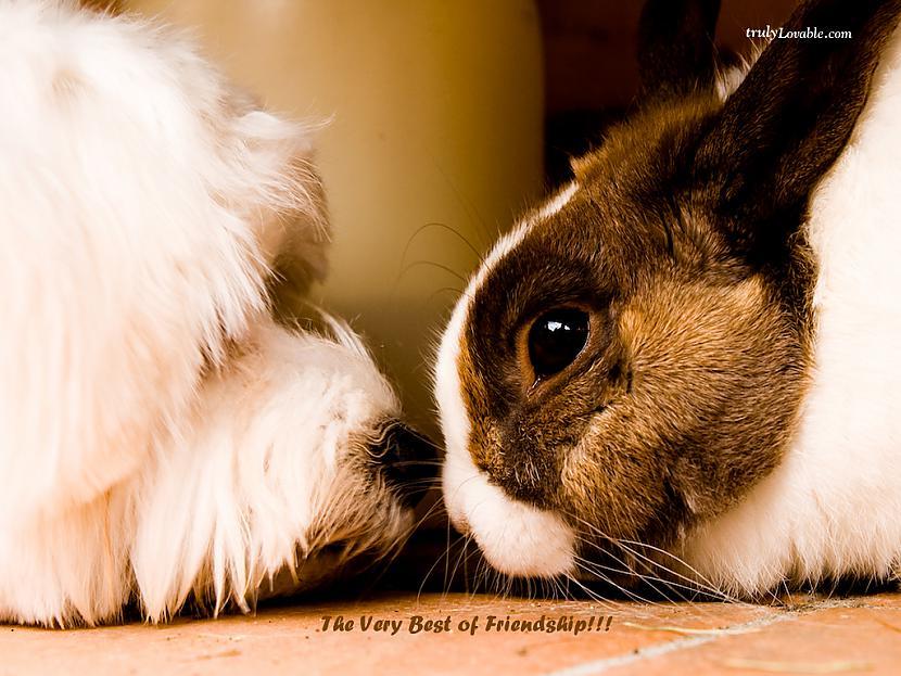 The real test of friendship is... Autors: Fosilija Draudzība.