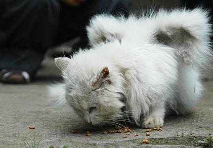 Spārnots kaķis ir termins ar... Autors: sviestapika Spārnoti kaķīši