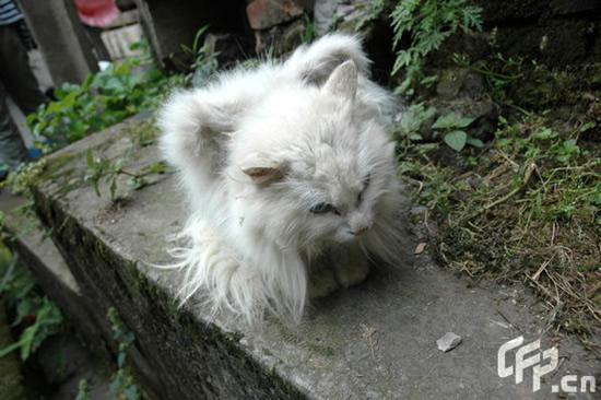 Autors: sviestapika Spārnoti kaķīši