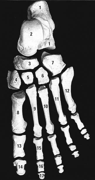 Tu piedzimsti ar 300 kauliem... Autors: Fosilija Fakti par tevi!