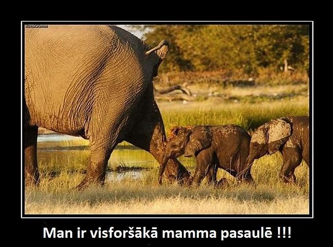 mammīte Autors: Jaunais2010gads melnie rāmji