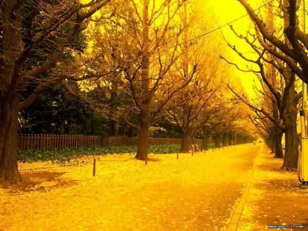 Autors: Bebis Yellow Lifestyle