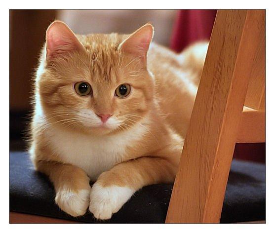 Mans mīļākais darbs ir nedarīt... Autors: Fosilija Mūsu mīļie kaķi 2.daļa