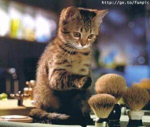 Dzīve bez krējuma ir dzīve bez... Autors: Fosilija Mūsu mīļie kaķi 2.daļa