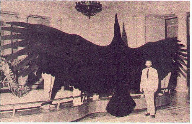 Lielākais lidojošais putns... Autors: Fosilija Daži krutākie zīdītāji un putni