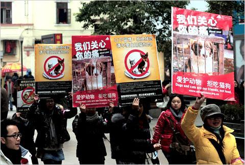Nav tā ka Ķīnā un Japānā kaķus... Autors: Shanta Tiek glābti dzīvnieki Ķīnā un Japānā..