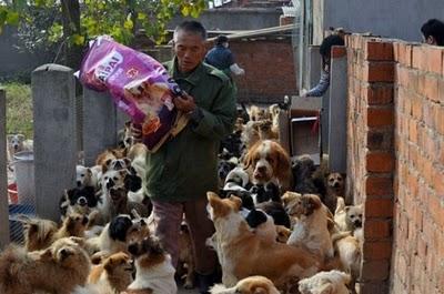 Tiek veidotas speciālas... Autors: Shanta Tiek glābti dzīvnieki Ķīnā un Japānā..
