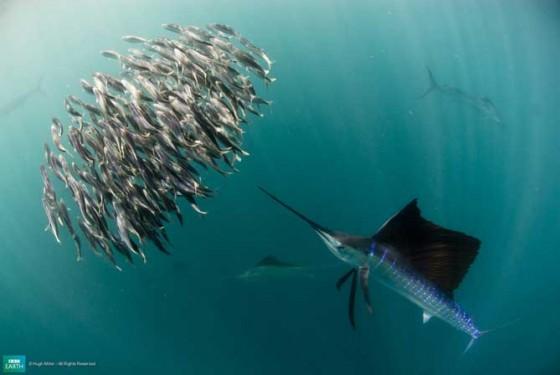 9BuruzivsVarētu padomāt ka šī... Autors: Katchibaba Top 10 dabas visinteresantāk izkrāsotie dzīvnieki