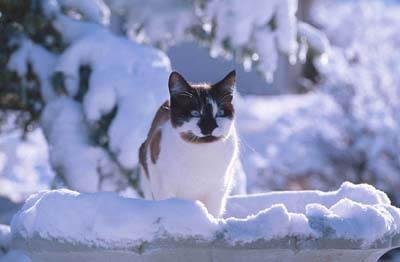 Kaķis nolec no palodzes un ... Autors: The Diāna Mani dr.lv runā teksti 3.