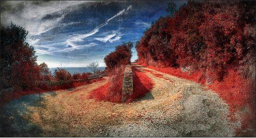 G2Studio Photography Autors: jankabanka Neticami infrasarkanās fotogrāfijas paraugi.