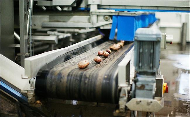 Nomazgā kartupeļus Autors: Nāriņš Lays ražotne