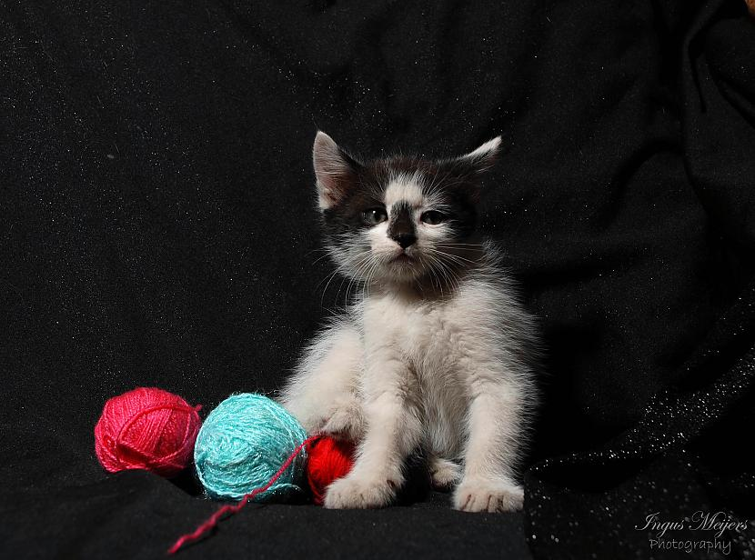 Autors: Ungus Kaķu stāsts bildēs