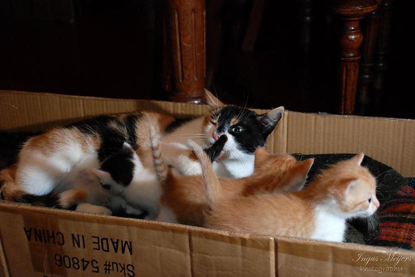 Šinī kastē mēs piedzimām un ta... Autors: Ungus Kaķu stāsts bildēs