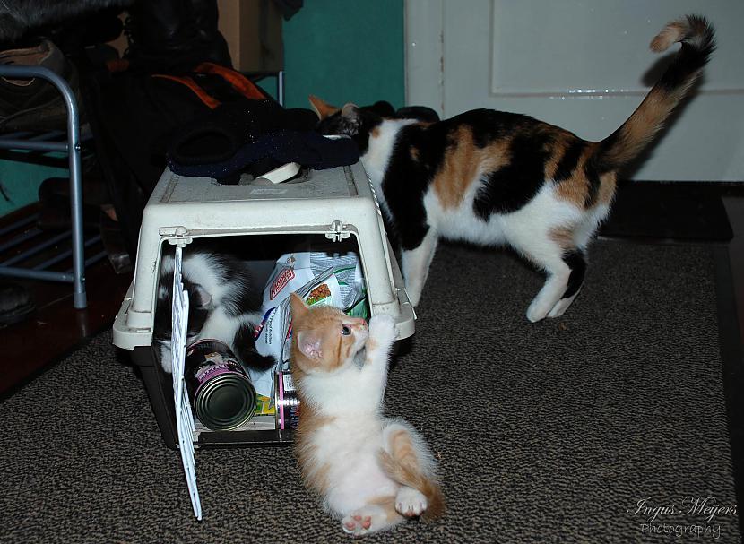 Viss ir kārtībā Bērni var... Autors: Ungus Kaķu stāsts bildēs