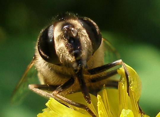 Bitei ir 5 acisdivas lielas... Autors: Fosilija Vai zināji ka