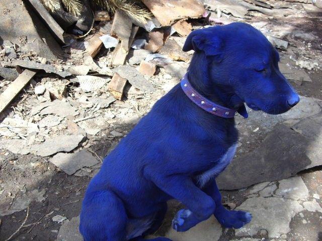 """Smuks suņuks tikai krāsa... Autors: Politikānis Suns""""Avatars""""?"""