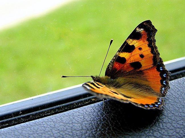 Dzīve ir ceļojumsatver logu un... Autors: Aliseens Patiesi teksti . II. Daļa :)