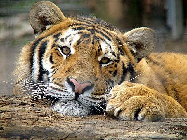 Autors: kika1990 Dažādas dzīvnieku bildītes:)