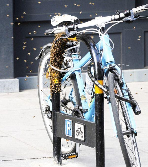 Autors: MJ Ekstrēms veids kā pasargāt savu velosipēdu no zagļiem!!