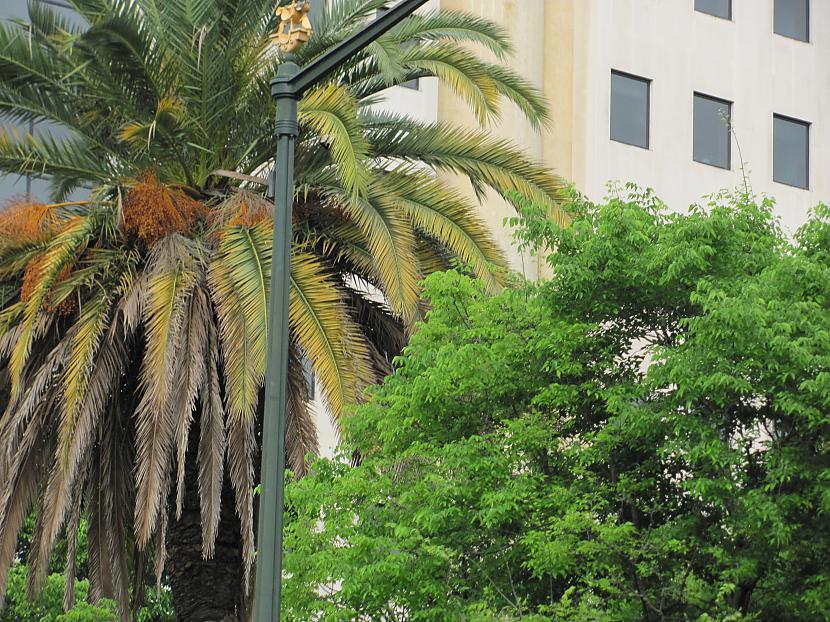 Bij daudz palmas bet  visas... Autors: Skoolnieks Mans ceļojums uz Portugāli