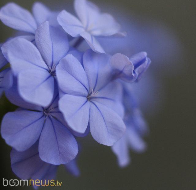 Autors: mošķītis12 Cik skaisti!