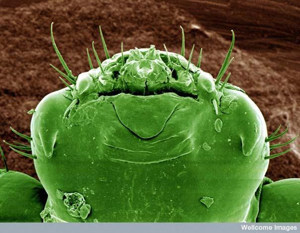 Kaunuma uts galva Autors: MILFS Aplūkojot pasauli ar mikroskopu