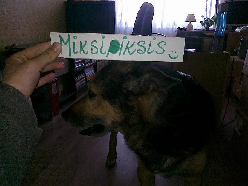 Kā arī pats suns Autors: Fosilija Suņa siksniņa.