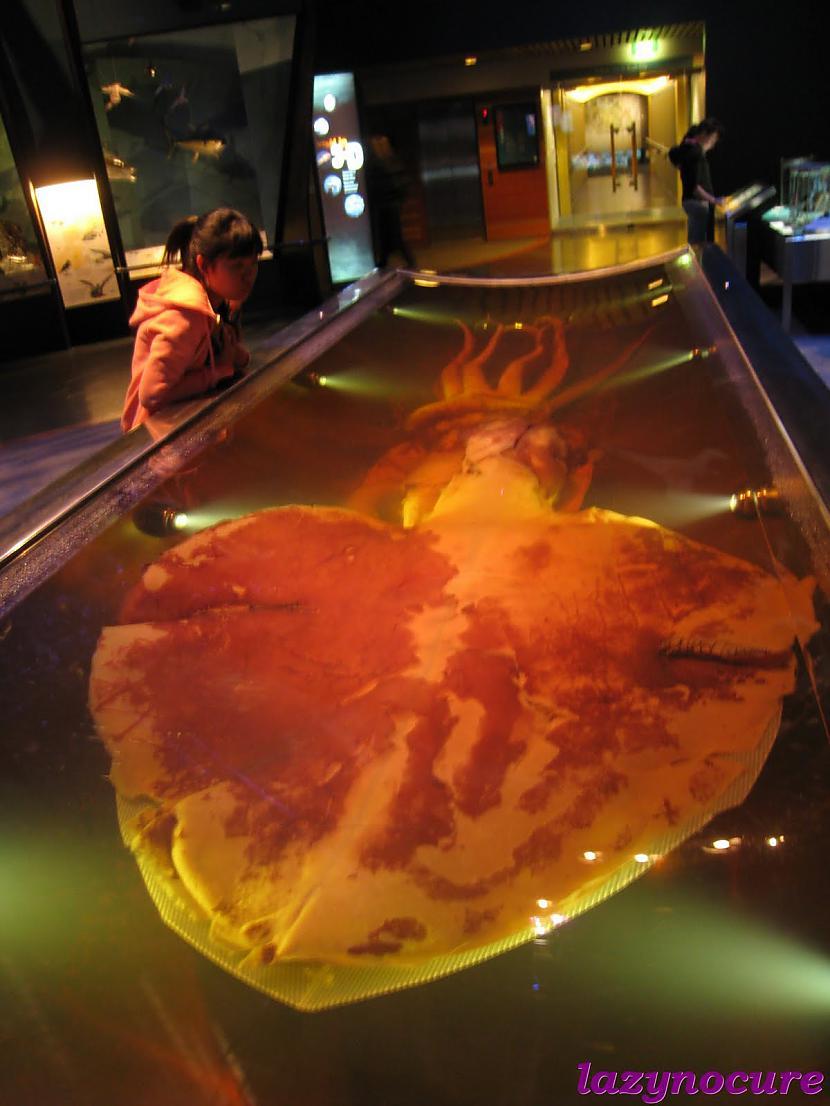 Autors: Herby Kolosāls kalmāra monstrs