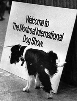 4 Pirmais suņu šovs notika... Autors: Sidža Suņuki!