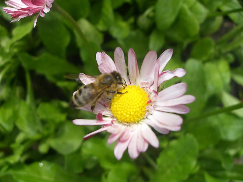 Bitēe  Autors: anely4 Dārzā