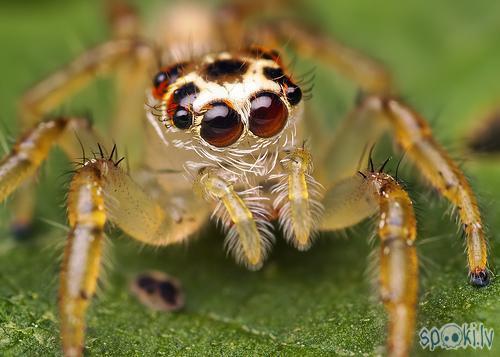 vai tik es neesmu jauks Autors: belo1995 zirnekļi