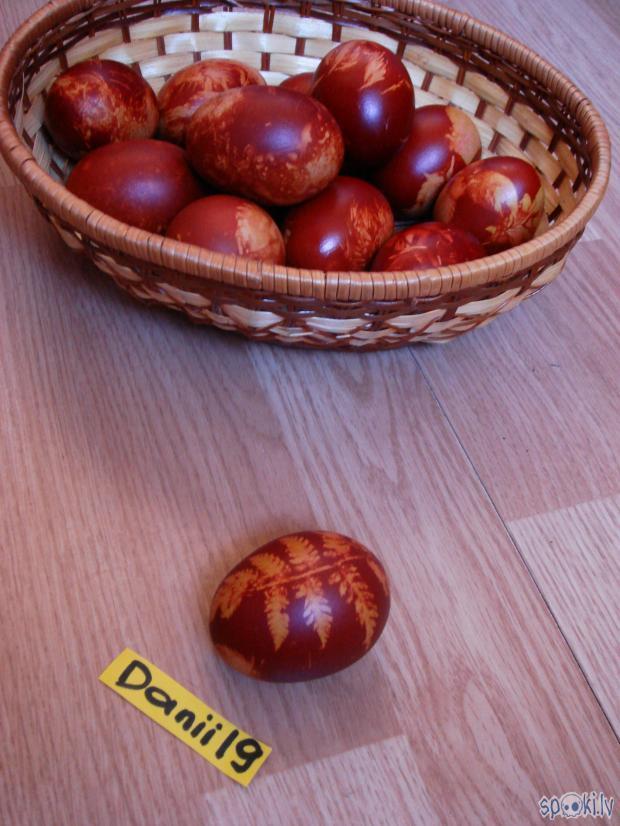 Autors: Danii19 Danii19 sīpolmizu & paparžu olas