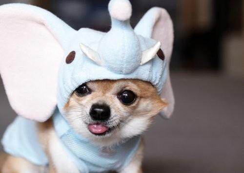 Autors: Datelee1212 Funny animals!