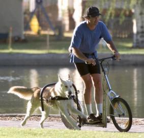 Motocikla veids Jums noteikti... Autors: smileDD 5 veidi kā izstaidzināt suni.