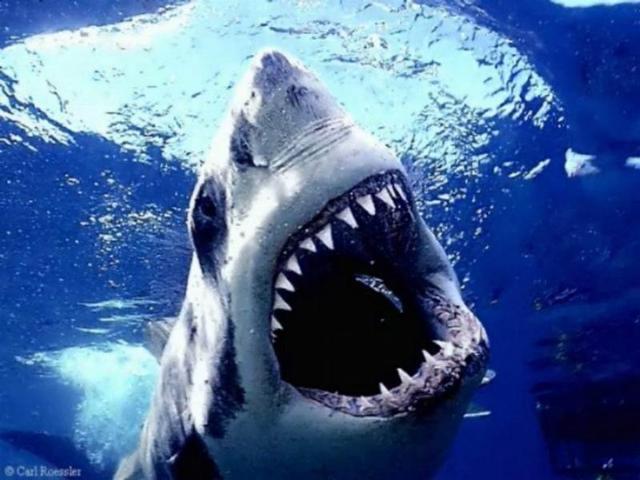 Haizivs ir spējīga sajust... Autors: TripleH Ļoti interesanti fakti! 2