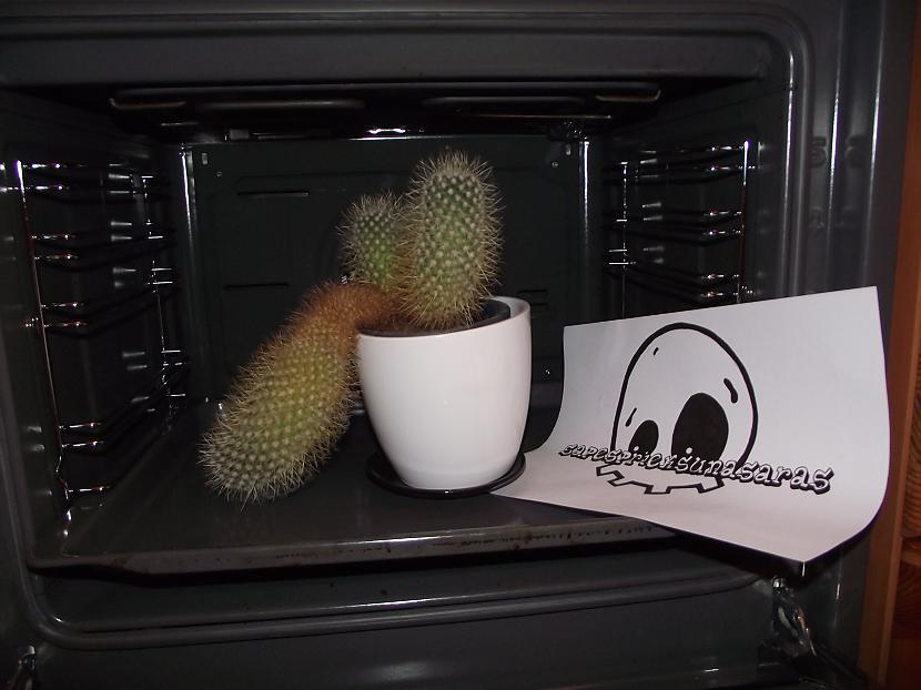 Autors: sapesprieksunasaras Cepts Kaktuss