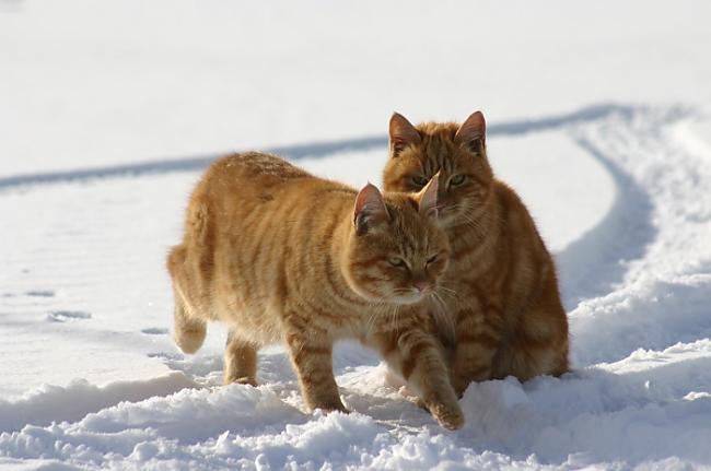 Dzīvnieku pasaulē lielāks IQ... Autors: SūduCentrs Kaķi vai citplanētieši?