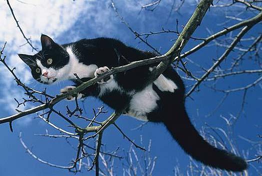 Kaķa glāstīšana cilvēkam... Autors: SūduCentrs Kaķi vai citplanētieši?