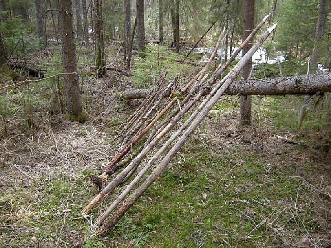 Mēs noliekam sagatavotos... Autors: Dark Mist Kā uzbūvēt patvērumu mežā.