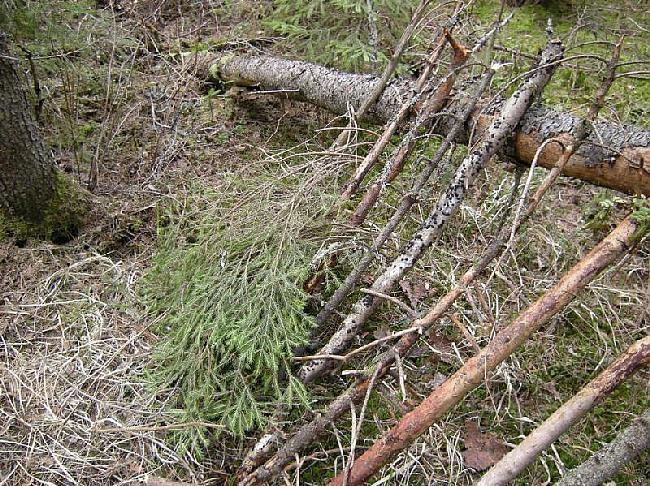Sākam likt no apakšasTas ļaus... Autors: Dark Mist Kā uzbūvēt patvērumu mežā.