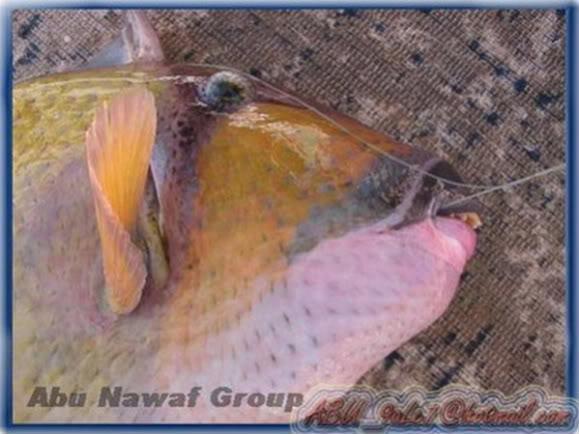 Autors: pagājušāgadaraža Zivs ar cilvēka zobiem!